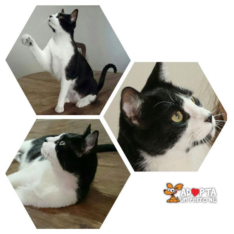 Adopta un Perro NL - Galer�a de Gatos